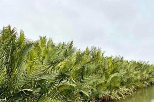 Dựng 'bê-tông' xanh trên phá Tam Giang