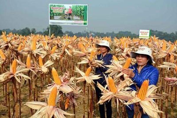 Phát triển nông nghiệp không thể thiếu sự đóng góp của công nghệ sinh học