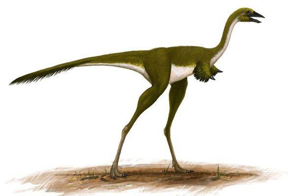 Cận cảnh loài khủng long có đôi tay dị dạng nhất quả đất