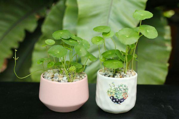 12 con giáp trồng cây phong thủy nào để vượng tài phát lộc?