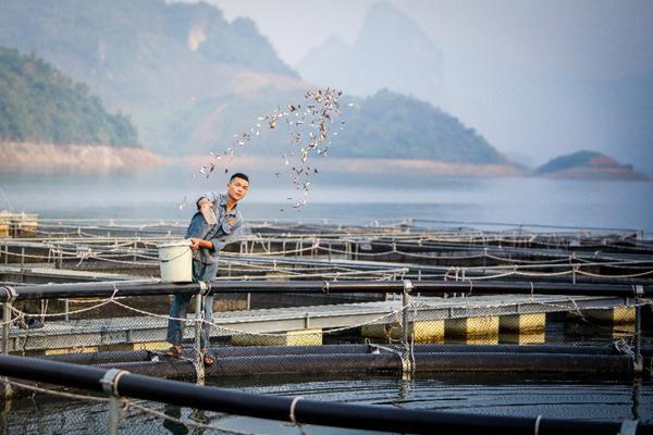 Cận cảnh trang trại nhân giống cá tầm 'triệu đô' ở Việt Nam