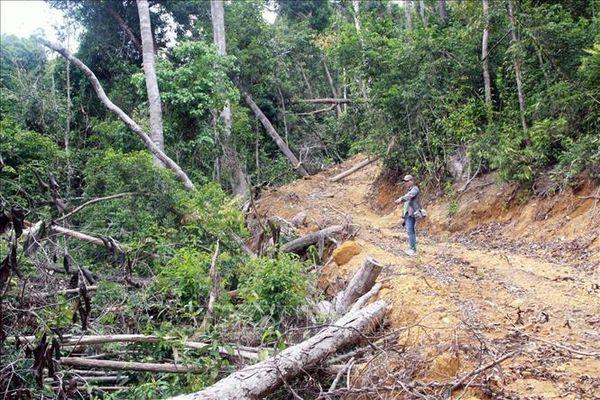 Khởi tố thêm hai bị can vụ mở đường phá rừng giáp ranh tại Phú Yên