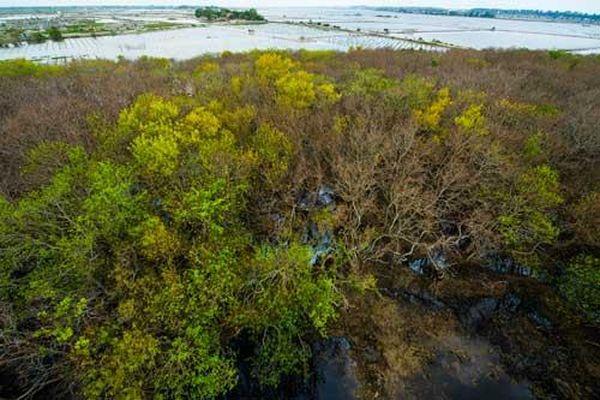 Ngắm mùa thu vàng ở rừng ngập mặn nguyên sinh Rú Chá