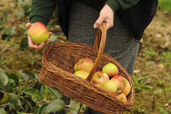 Trái cây mùa hè thơm ngon, bổ dưỡng nhưng các loại quả này có thể gây ung thư