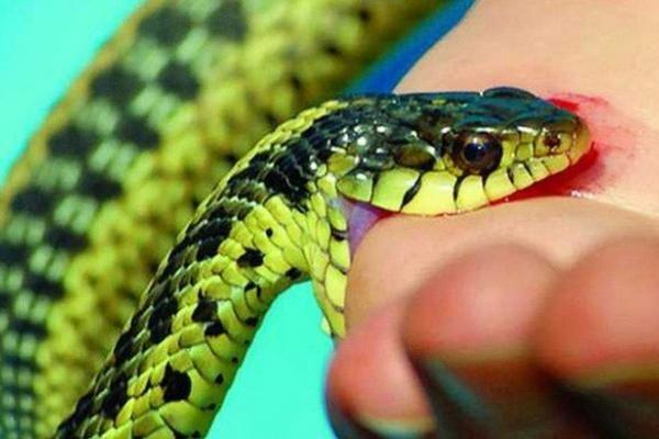 Mùa hè cần cảnh giác rắn độc cắn