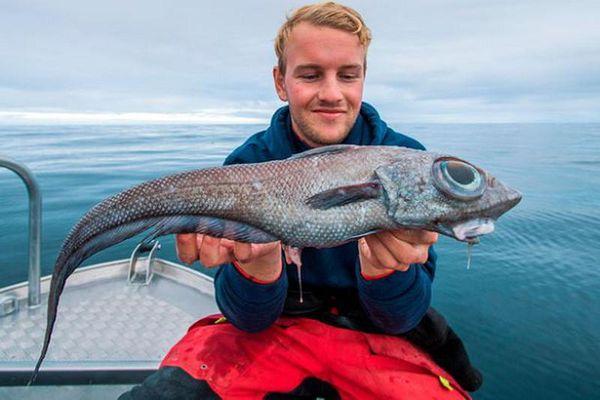 Ngư dân hoảng loạn khi câu được cá 'quái vật' hình thù kỳ dị