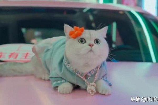 Chú mèo nhận thù lao 50 triệu/ buổi nhờ làm mẫu xe hơi chuyên nghiệp, giúp chủ nhân một bước 'đổi đời'
