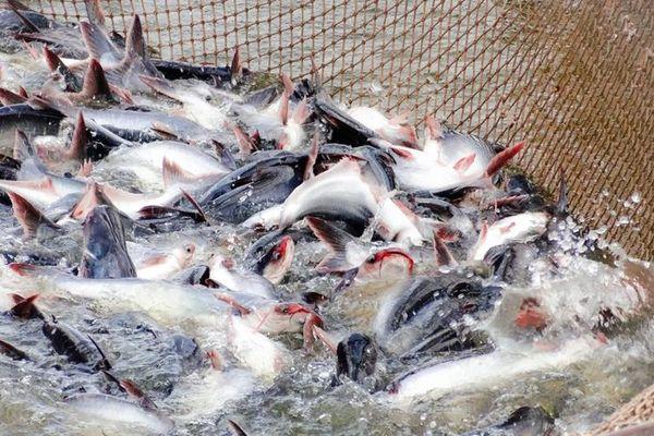 Chế biến phụ phẩm thủy sản: Xóa khoảng trống tỷ USD