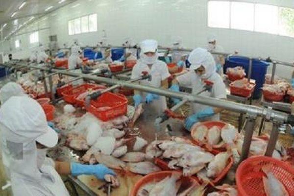 Công ty thủy sản lỗ gần 1.000 tỷ, nợ ngân hàng Sacombank gần 6 nghìn cây vàng