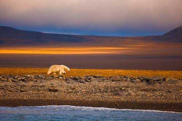 Khám phá Đảo Wrangel - khu bảo tồn tự nhiên của Nga