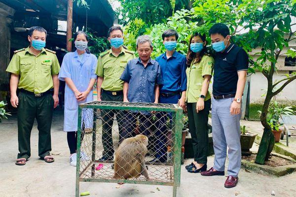 Bàn giao cá thể khỉ đuôi lợn và cu li nhỏ cho Vườn Quốc gia Vũ Quang
