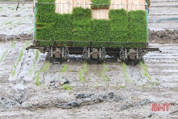 Máy cấy giúp nông dân Can Lộc tăng năng suất lúa