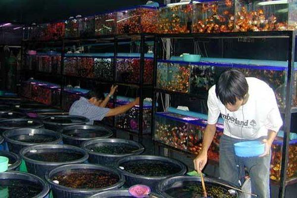 Khám phá bên trong chợ cá triệu đô tại Bangkok