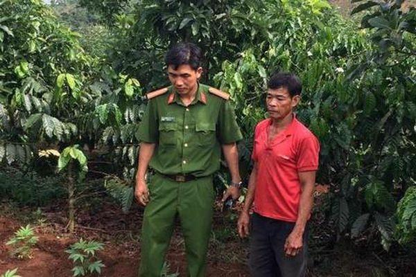 Cặp vợ chồng trồng hàng trăm cây cần sa để...chữa bệnh cho gà