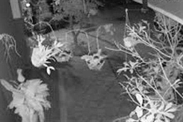 Trộm đột nhập lấy 19 chậu lan, trị giá nhiều tỷ đồng