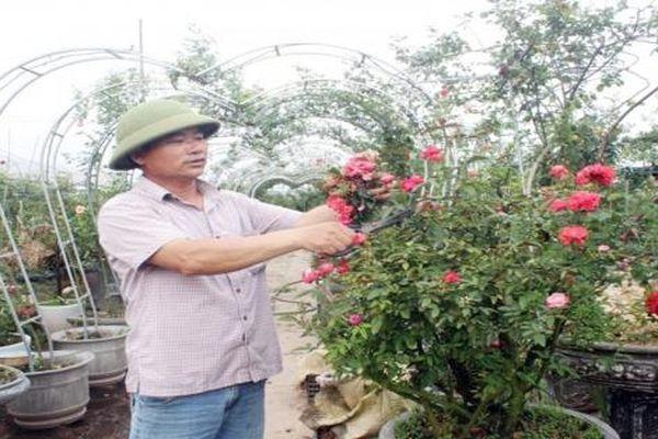 Làm giàu từ nghề trồng hoa, cây cảnh