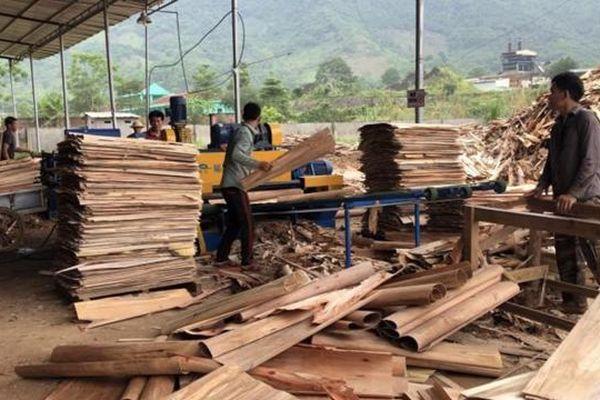 Các doanh nghiệp xuất khẩu gỗ ván bóc nhập nhèm trong khai báo để trốn thuế