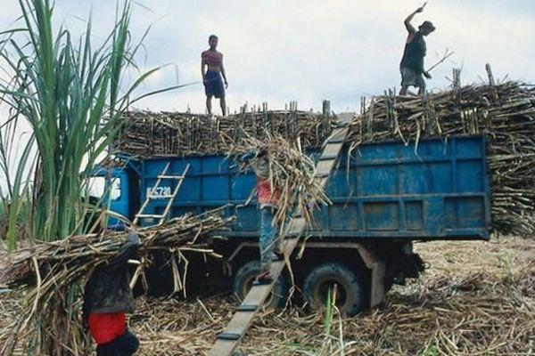 Tìm giải pháp cứu ngành mía đường