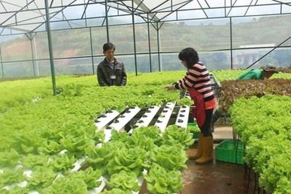 Nông nghiệp tiếp tục là trụ đỡ của nền kinh tế