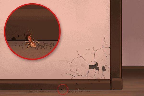 Coi chừng nhà bạn có mối mọt, sâu bọ nếu thấy những dấu hiệu này