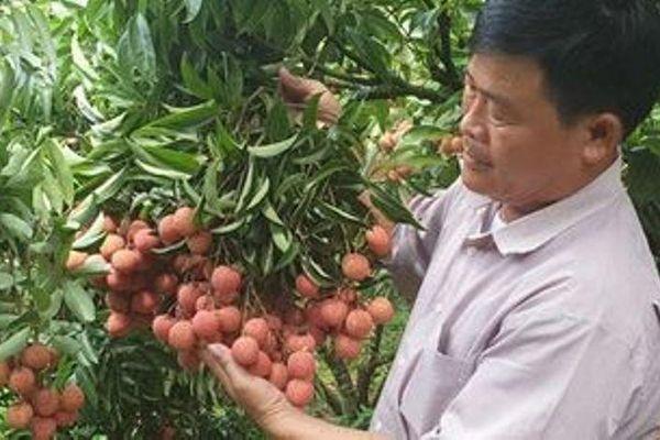 Nhật Bản ủy quyền cho Việt Nam giám sát vải xuất sang Nhật