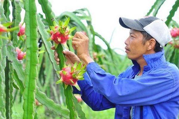 Lộ diện những mặt hàng rau quả triệu USD giúp nông dân lãi đậm