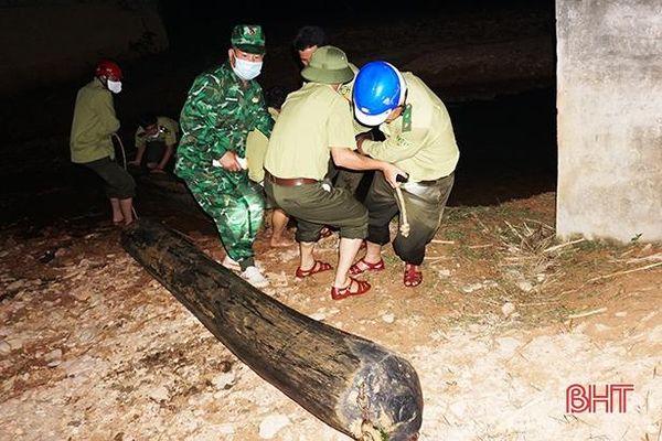 Phát hiện nhóm người dùng trâu kéo gỗ lậu trong đêm ở huyện miền núi Hà Tĩnh