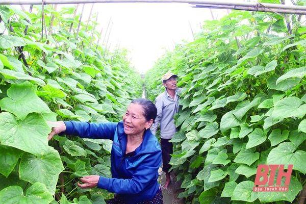 Chuyển đổi cơ cấu cây trồng - những vấn đề đặt ra: Cho một lộ trình bền vững