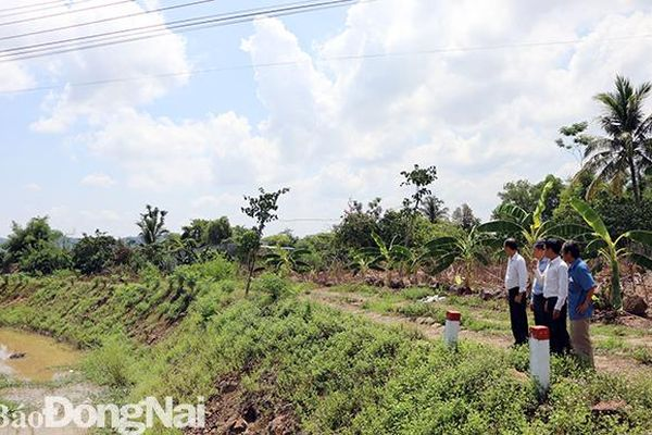 Dự kiến đến năm 2025, huyện Định Quán trồng 2,5 triệu cây xanh