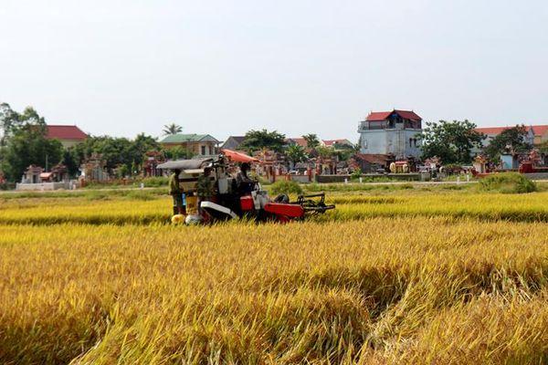 Quảng Ninh: Năng suất lúa đông-xuân ước đạt 63 tạ/ha