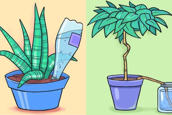 5 cách giúp bạn có thể tưới cây kể cả khi vắng nhà