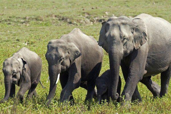 18 con voi hoang dã chết vì bị sét đánh