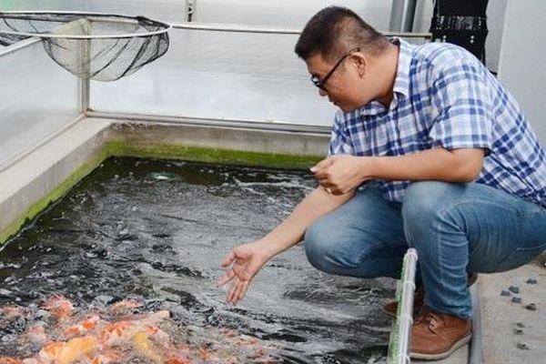 Thanh niên 8x bỏ viên chức nhà nước về nuôi cá Koi Nhật Bản, mỗi năm xuất bán hàng nghìn con