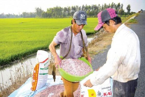 Giá phân bón tăng cao, nông dân gặp khó