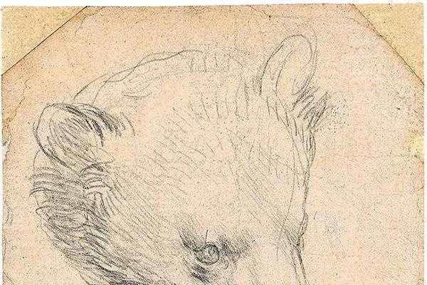 Tác phẩm Head of a Bear của Leonardo da Vinci được kỳ vọng bán với giá hơn 16 triệu USD