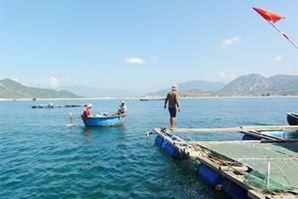 Thẩm quyền xử lý vi phạm trong nuôi trồng thủy sản