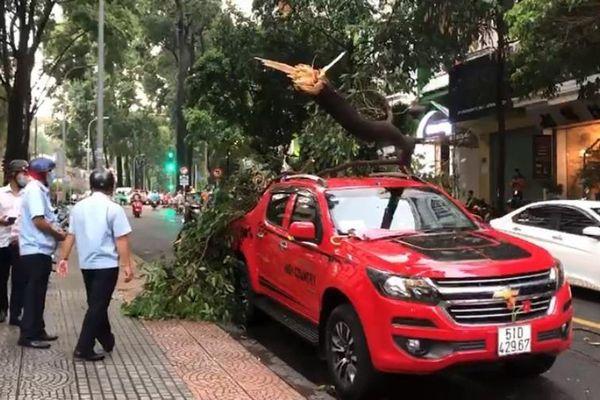 TP.HCM rà soát hệ thống cây xanh trên đường phố