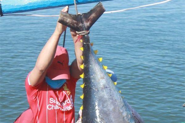'Báo động đỏ' nghề khai thác thủy sản (bài 5)