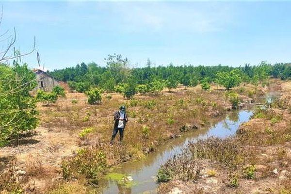 Kiểm tra hàng loạt trại heo tại Đắk Nông sau phản ánh của báo Tiền Phong