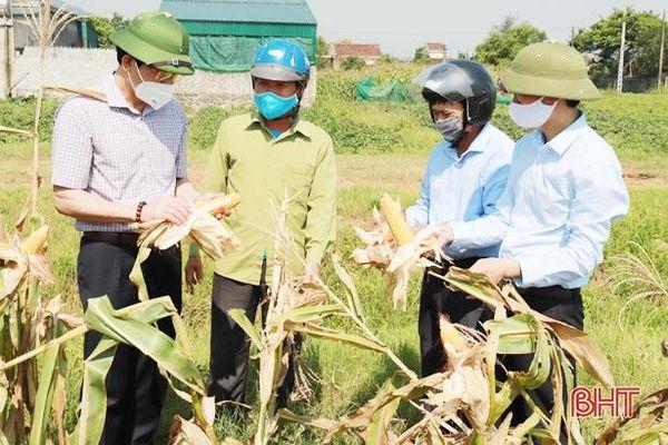 Năng suất cây trồng vụ xuân ở Nghi Xuân ước tăng 15 - 30%