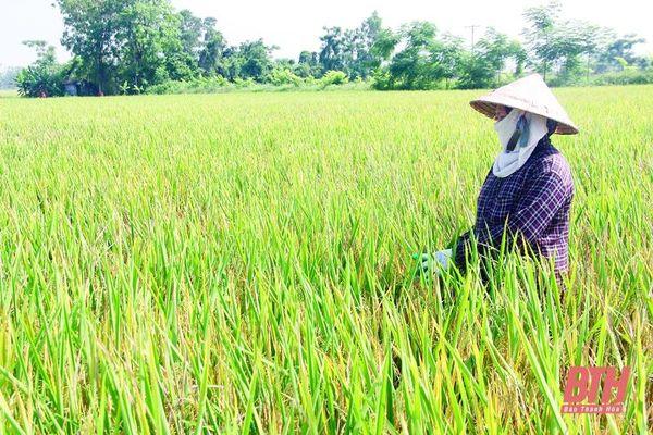 Ngành trồng trọt tiếp đà tăng trưởng
