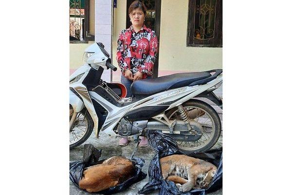 Bắt đối tượng vận chuyển động vật hoang dã trái phép
