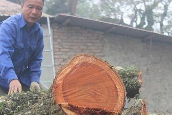 Giữa dịch COVID-19, lô gỗ sưa 'trăm tỷ' trong thùng container bao giờ được đấu giá?