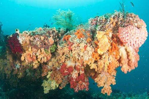 Rực rỡ sắc màu dải san hô vùng Raja Ampat