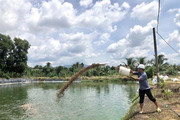 Khởi sắc mô hình kinh tế trang trại ở tỉnh Bà Rịa-Vũng Tàu
