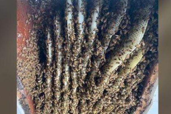 Nghi ong làm tổ trong nhà, người phụ nữ gọi người đến kiểm tra, kết quả khiến ai cũng ngỡ ngàng