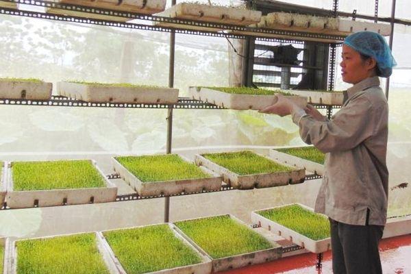 Phát triển ngành nghề nông thôn: Chú trọng chất lượng nguồn nhân lực