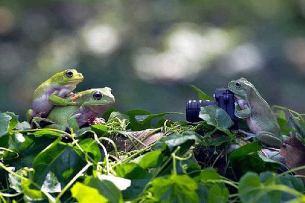Kỹ năng selfie của ếch xanh