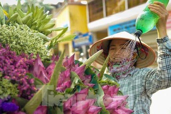 Ngẩn ngơ hương sắc sen đầu mùa xuống phố Hà Nội