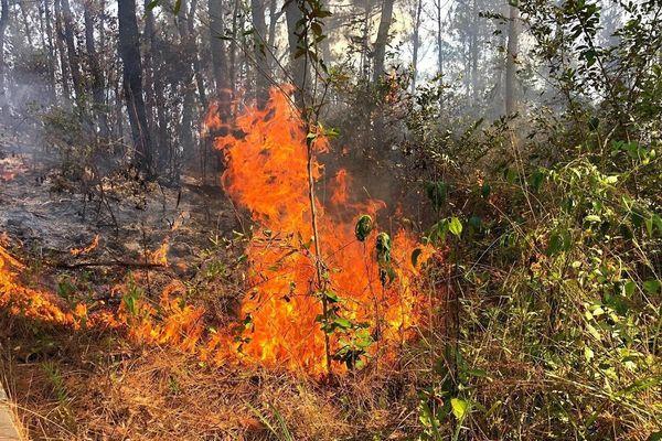 45 hecta rừng ở Quảng Nam cháy suốt 20 giờ đồng hồ